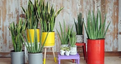 Beneficial indoor plants