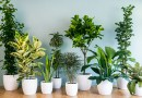 Die hard houseplants for the brown thumb (part 2 of 3)