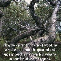 Now we enter the ancient wood. In what wild forms the gnarled and mossy boughs are twisted, what a sensation of sacred repose. ~Henry James Slack