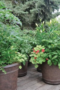 Nasturtiums and lilies fill the containers on the deck.