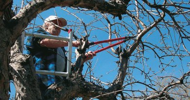 basic proper pruning techniques