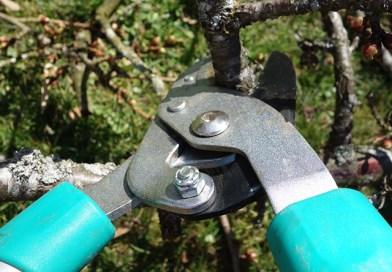pruning shrubs shears