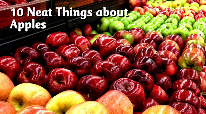 10 Neat Things about Apples