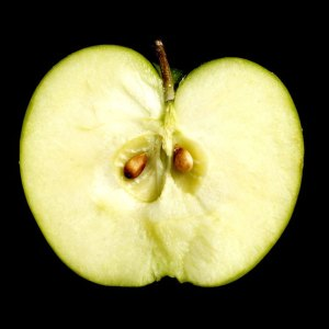Apple cross section