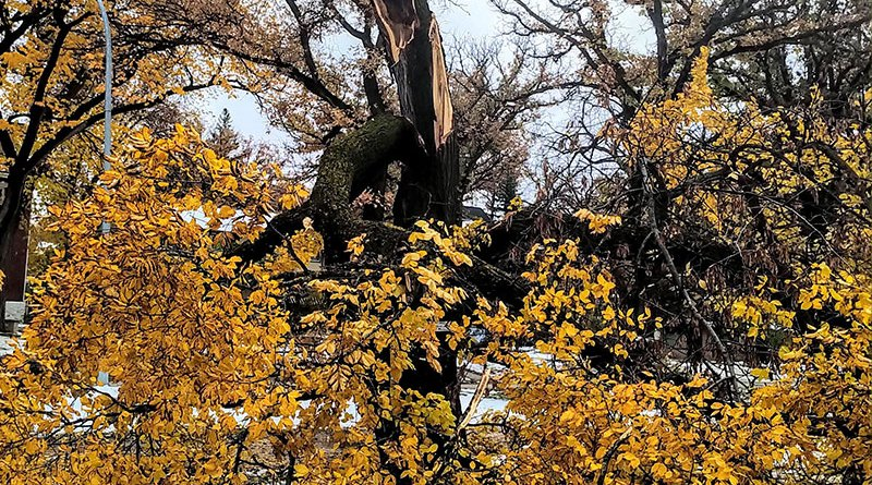 How to deal with your damaged trees after the storm