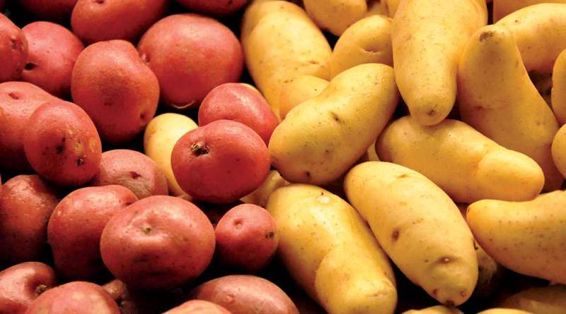 art of growing potatotes