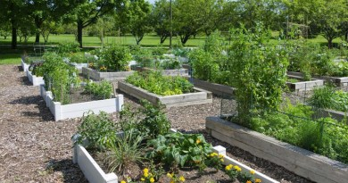 build your own victory garden