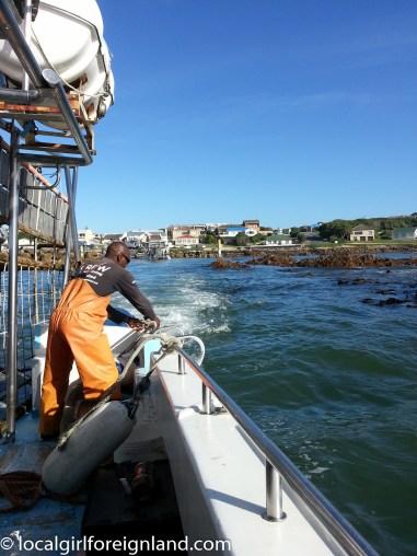 sharkcagediving-1