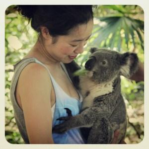 Koala, portrait, profile