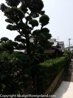 kumamoto-japan-122319