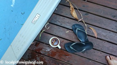 cairns-beaches-flashpackers-review-1287