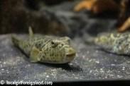 aquarium de la guadeloupe-2166