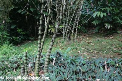 Jardin Botanique de Deshaies Guadeloupe-2104