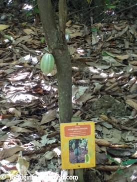 la-maison-du-cacao-guadeloupe-english-review-3604