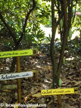 la-maison-du-cacao-guadeloupe-english-review-3606