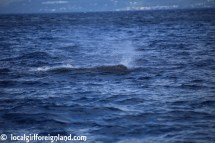 Les-Heures-Saines-Malendure-Guadeloupe-whale-watching-cruise-2379