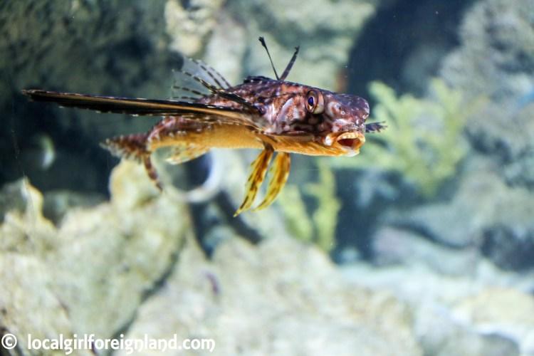 aquarium-guadeloupe-review-reopen-5163