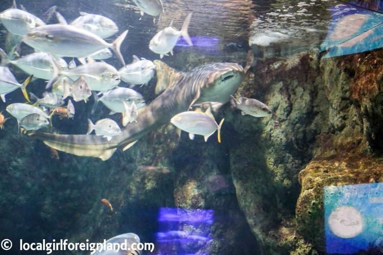 aquarium-guadeloupe-review-reopen-5201