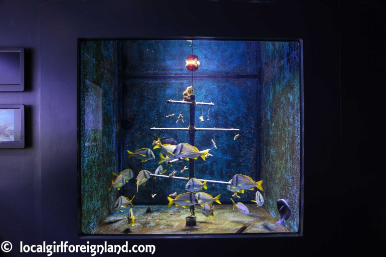 aquarium-guadeloupe-review-reopen-5254
