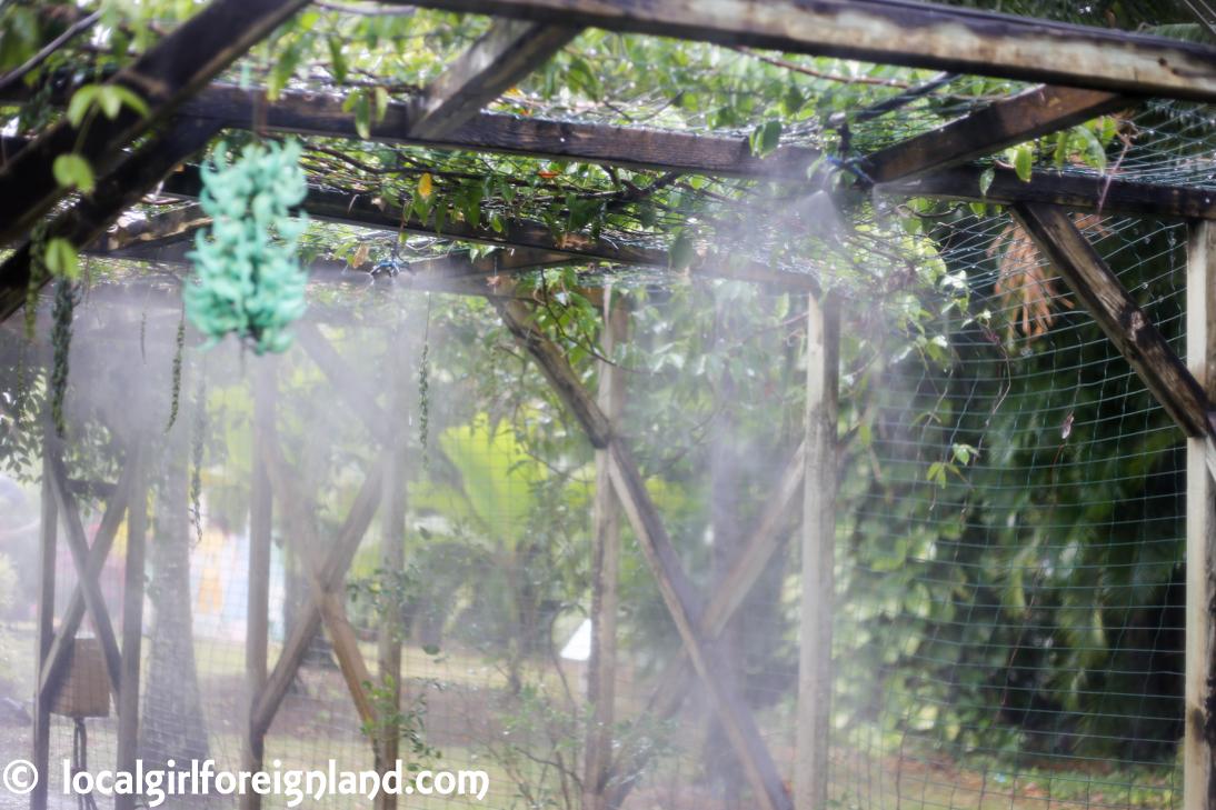 Jardin Botanique de Deshaies Guadeloupe-4808