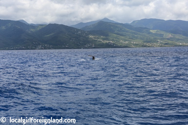 Les-Heures-Saines-Malendure-Guadeloupe-whale-watching-cruise-0171