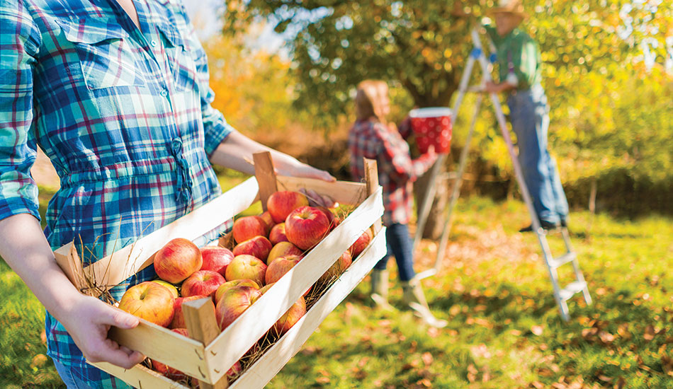 Fun for all ages at Saturday's Apple Festival