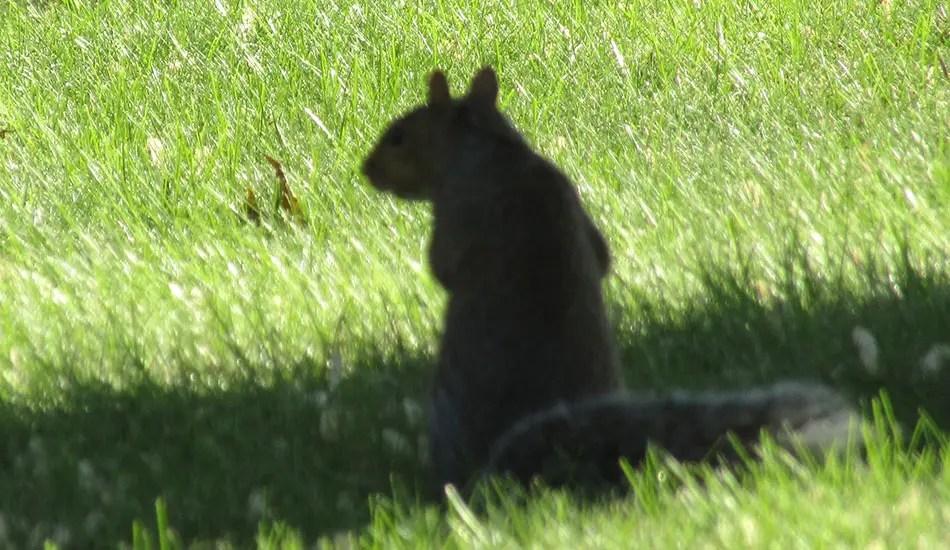 PHOTO: Shadowy figure