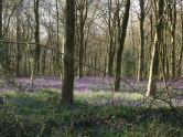 Meenfield Woods