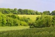 Hillside field near Downe
