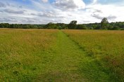 The large meadow behind Darwin's garden facing south west