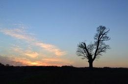 lone-tree-silhouette-sunset