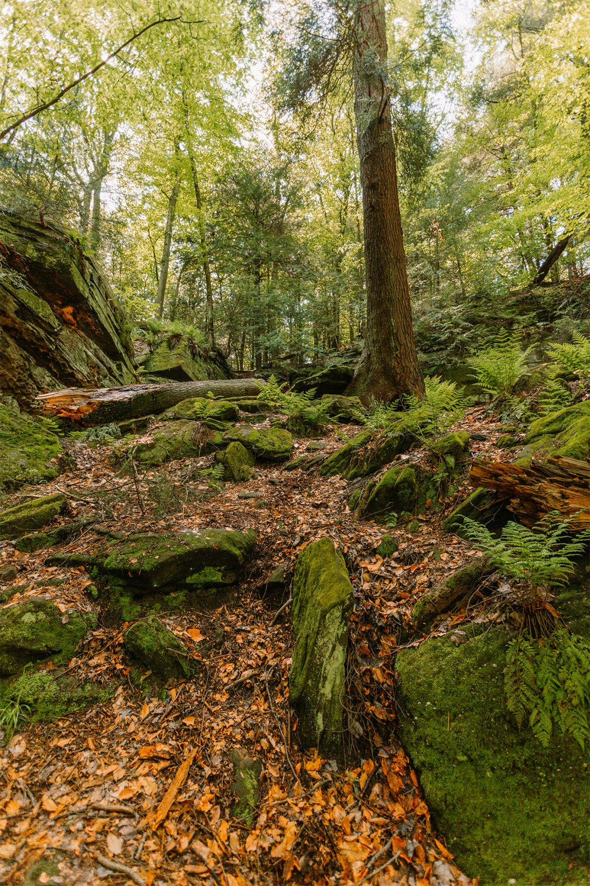 Tree growing between moss covered rocks