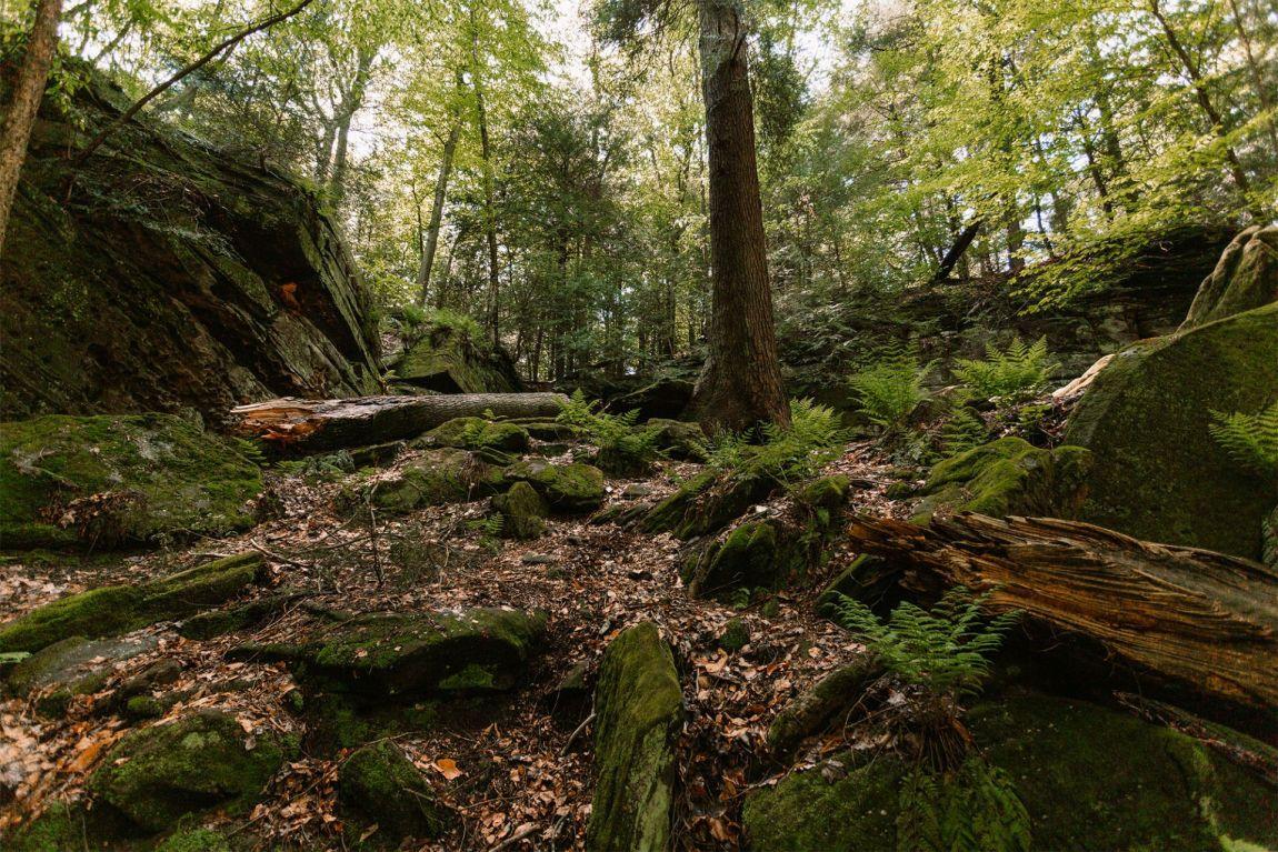 Trees growing between moss covered rocks