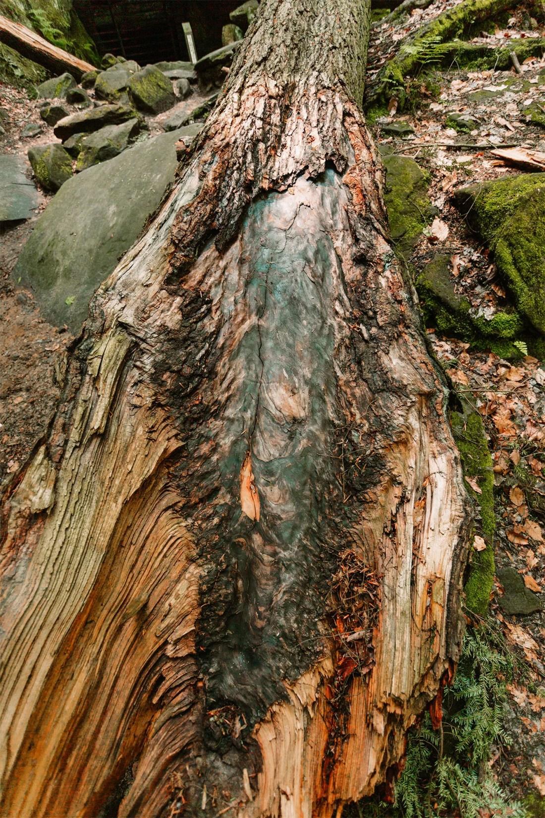 Burnt tree trunk
