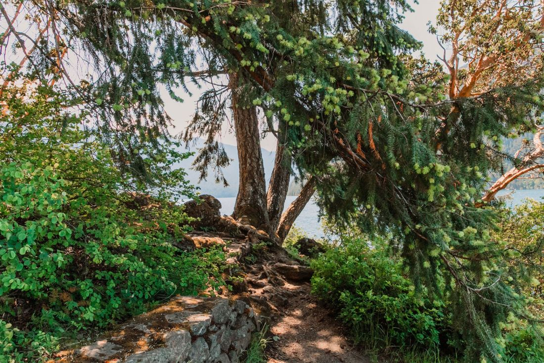 Tree at Crescent Lake, Olympic National Park | Local Love and Wanderlust