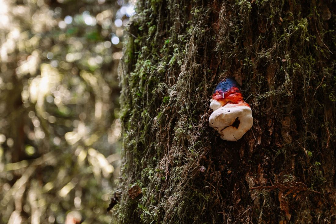 Mushroom in Olympic National Park   Local Love and Wanderlust