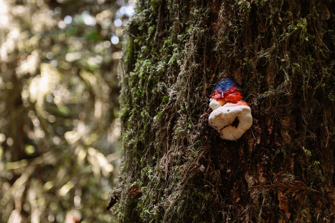 Mushroom in Olympic National Park | Local Love and Wanderlust