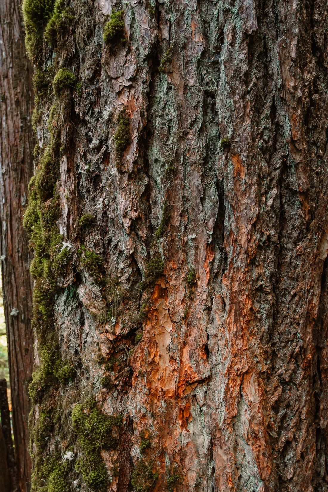 A textured tree at Marymere Falls, Olympic National Park   Local Love and Wanderlust