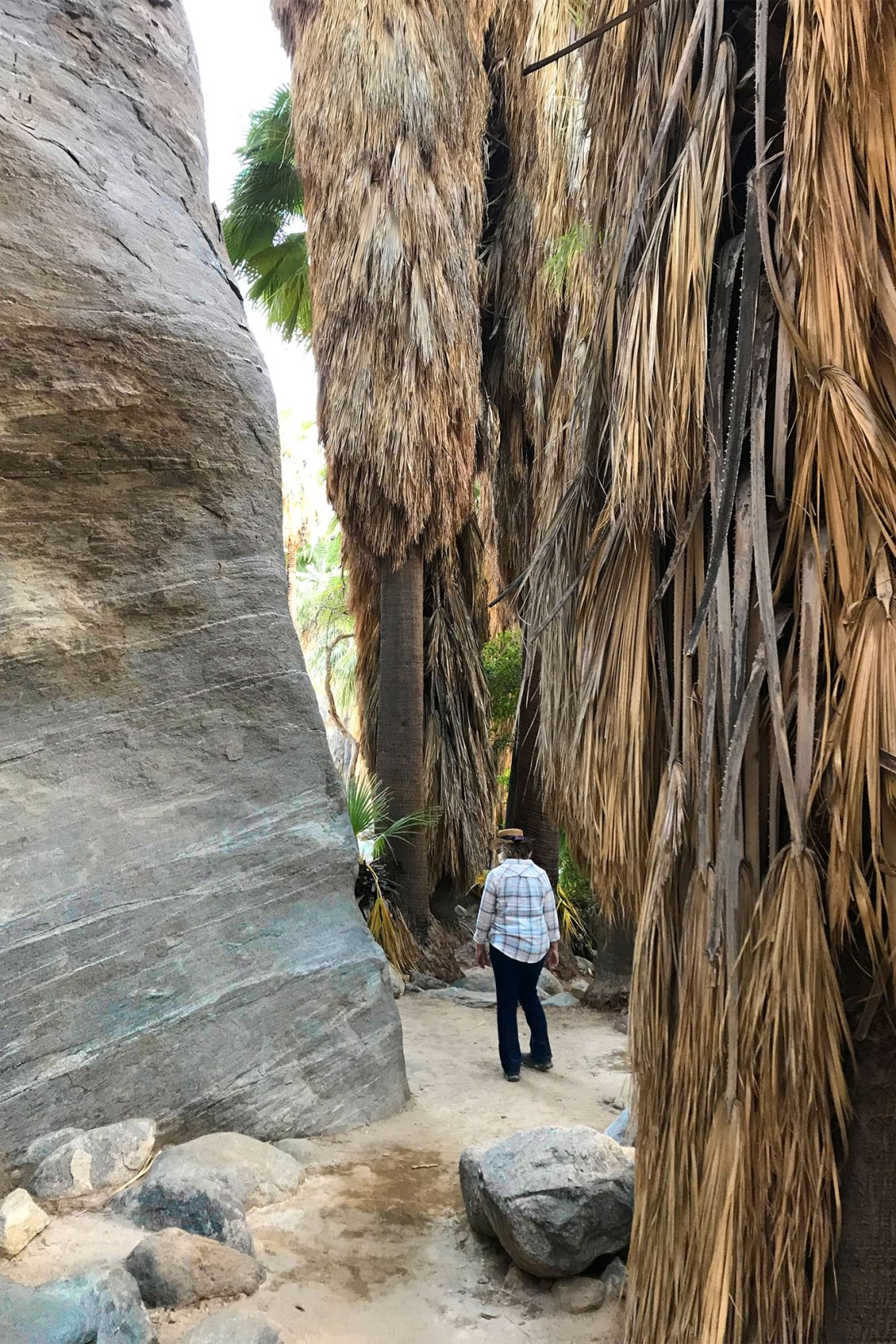 Woman walking through canyon and palms in Indian Canyons Palm Springs