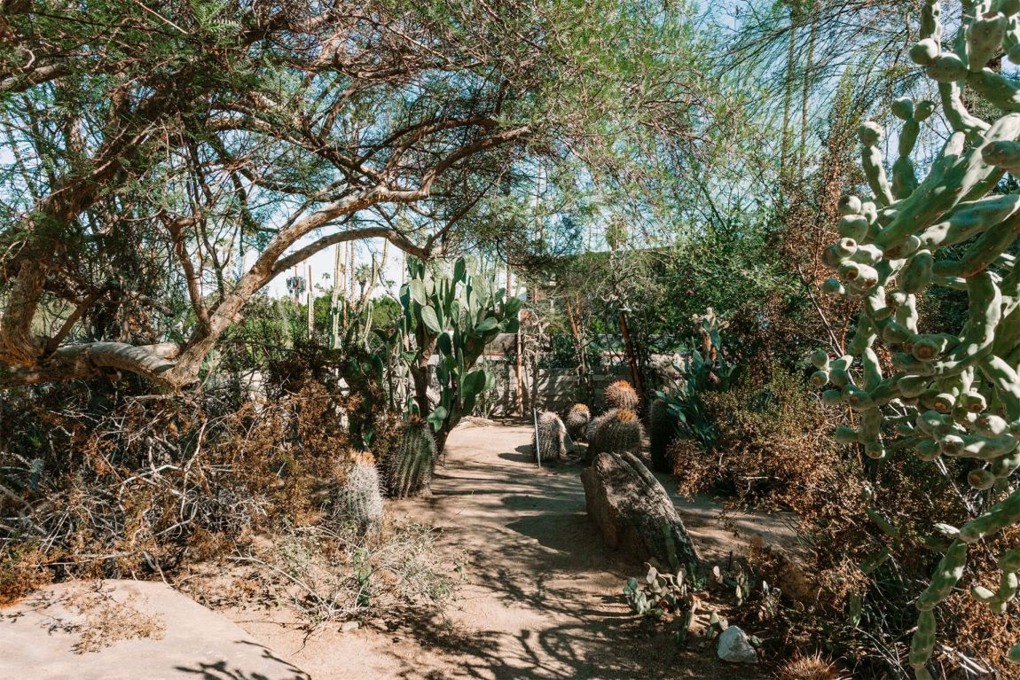 A path surrounded by a variety of cactus plants in a desert garden setting