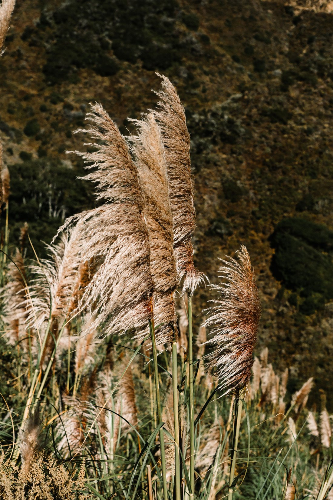 Tall wheat like grass seen in Big Sur | as seen on the Local Love and Wanderlust Blog