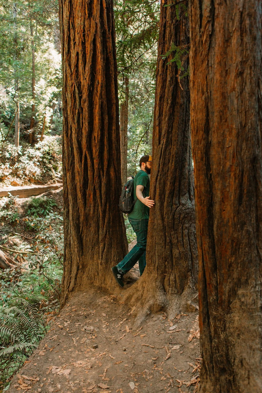 A man walks through tall Redwood Trees in Muir Woods National Monument