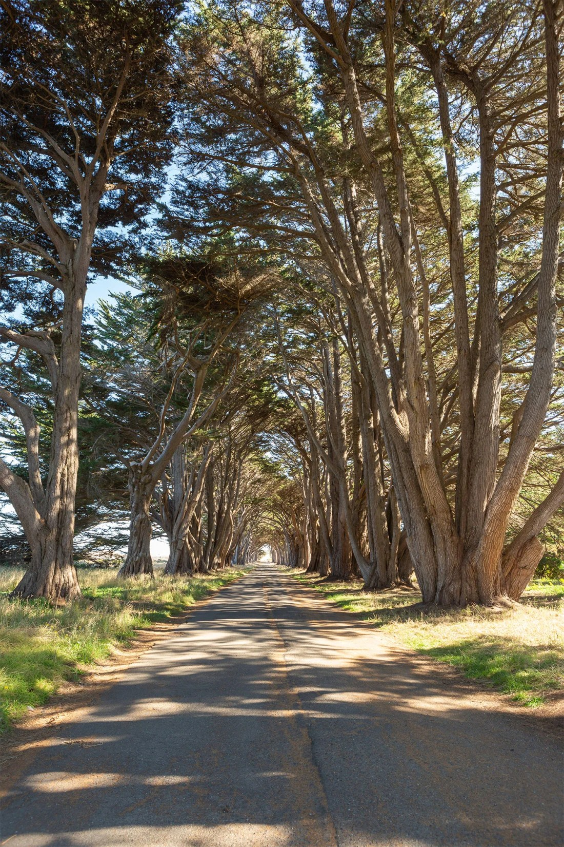Tree Tunnel in Point Reyes