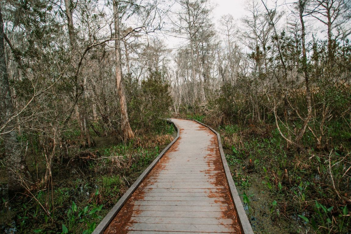 A wood path leading into the swamp