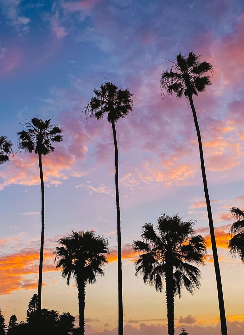 Palm Trees at Sunset in La Jolla, California