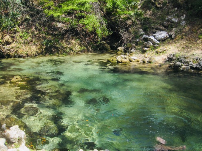 The Suwannee River serves as the heart of the Floridian aquifer which often flows to the surface through its springs. Photo Courtesy of Blake Harvey at geodes.net