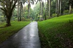 Teen terror kills man praying in Ang Mo Kio garden - 11