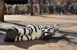 Tokyo zoo stages'zebra escape' - 4