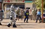 Tokyo zoo stages'zebra escape' - 6