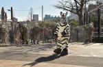 Tokyo zoo stages'zebra escape' - 7
